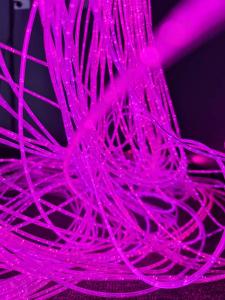 sensory filaments